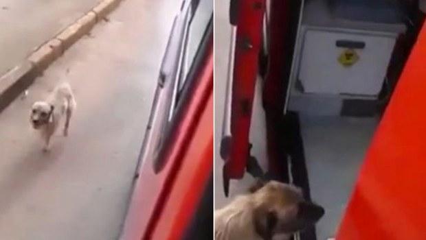 Sahibinin Peşinden Hastaneye Koşan Köpek