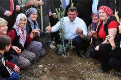 Metin Feyzioğlu Yırca'da Zeytin Ağacı Dikti!