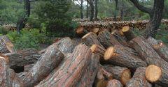 2 Milyon Ağaç Risk Altında