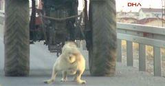 Köpeği Traktörün Arkasına Bağlayan Vanlı