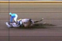 Şanlıurfa'da At Yarışlarında İlginç Kaza