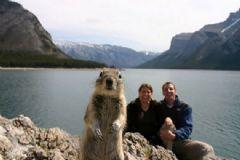 Bu Hayvanlar Fotoğrafların Davetsiz Misafiri