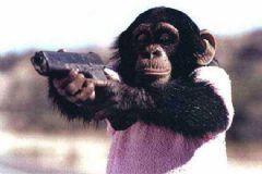 Maymuna Silah Verilirse Ne Olur?