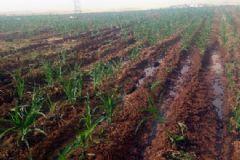 PKK Yumurtalık Boru Hattına Saldırdı