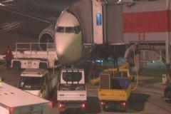 Uçak Köpeğe Çarptı, Hava Trafiği Aksadı