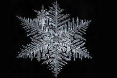 Kanadalı Fotoğrafçıdan 'Kar Taneleri'