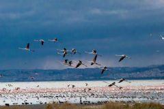 Ege'de 69 Farklı Türde Kuş Tespit Edildi