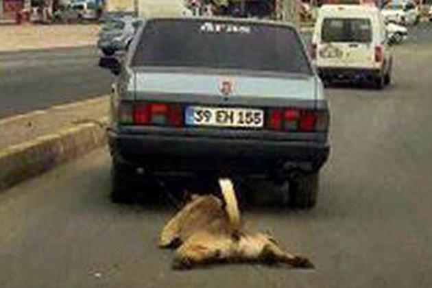Aracının Arkasına Köpeği Bağlayarak Sürükleyen Cani Yakalandı