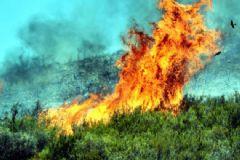 Bodrum'da Piknik Alanında Çıkan Yangın Zeytinliklere Sıçradı